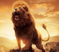 This is a photograph of a male lion standing tall and roaring in defense of its territory.